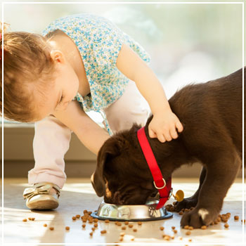 Child petting a dog as he eats
