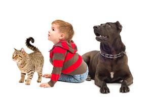 Curious-boy-dog-and-a-cat