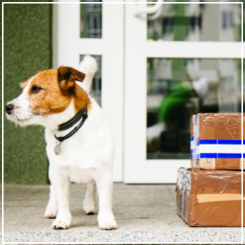dog next to packages on porch